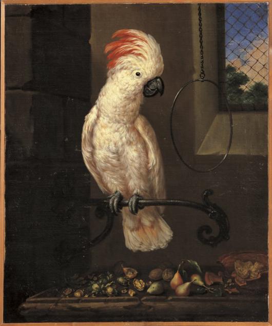 Bartolomeo Bimbi Pappagallo Bianco delle Molucche 1716